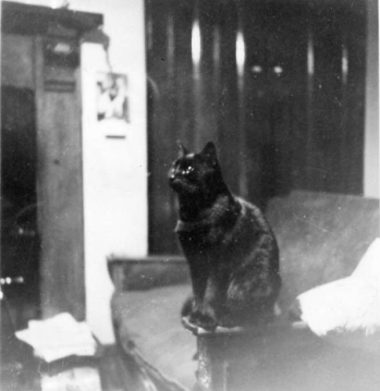 Cat by Gaslight, 1944 png